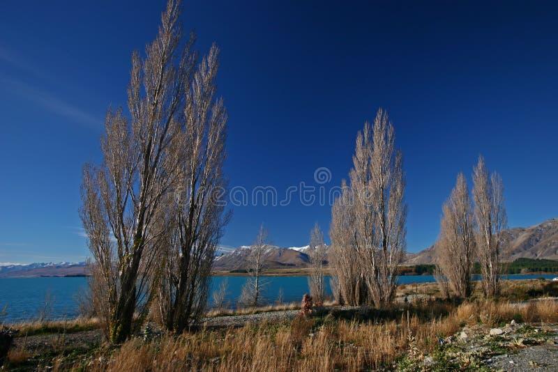 Idylliczni nabrzeżni bezlistni cyprysy z odległymi górami w jesieni zdjęcie stock
