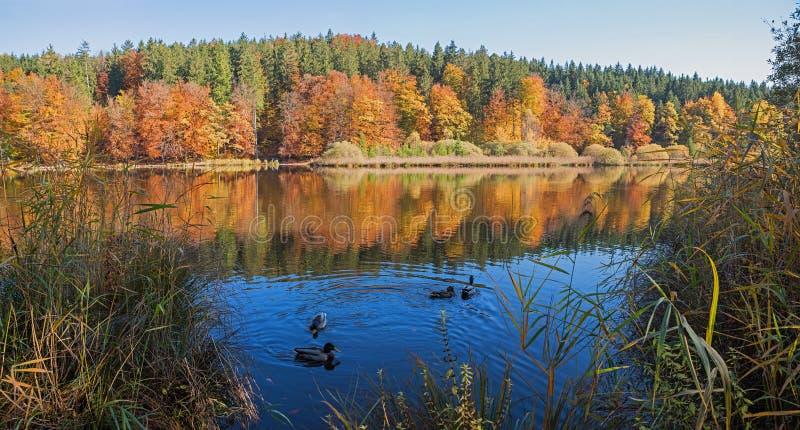 Idylliczny cumuje jeziornego deininger weiher przy świtem, jesienny krajobrazowy b zdjęcia stock