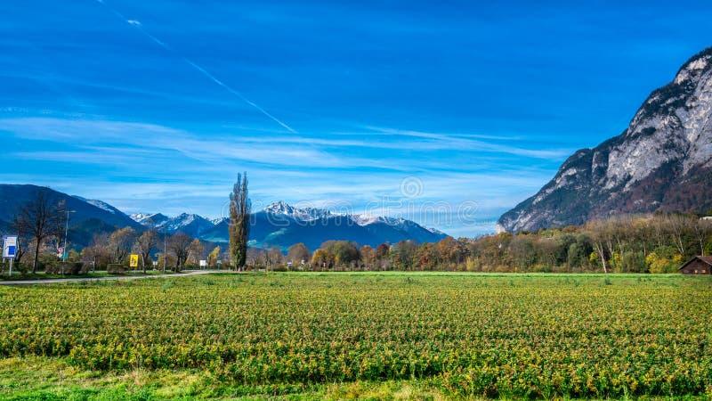 Idylliczny krajobraz Z Świeżą Zieloną łąką zdjęcia royalty free