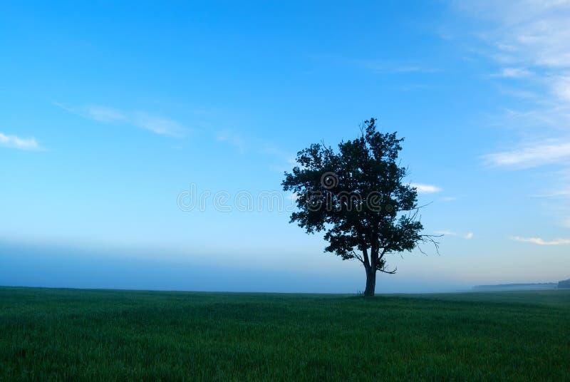 idylliczny krajobrazowy ranek fotografia royalty free