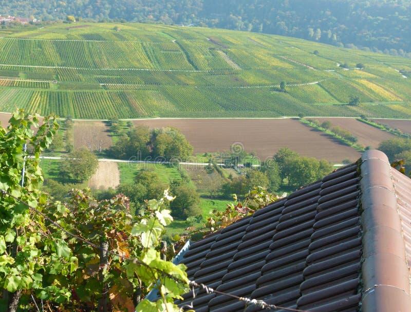 Idylliczny południowy niemiec krajobraz z udziałami wina dorośnięcie zdjęcia royalty free