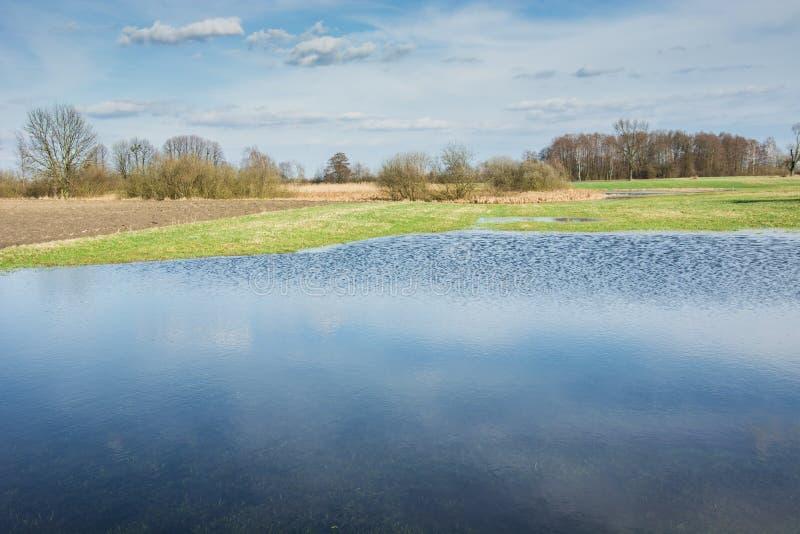 Idylliczny widok wiosny łąka, woda po deszczu, drzewa i pogodni nieba, obrazy stock