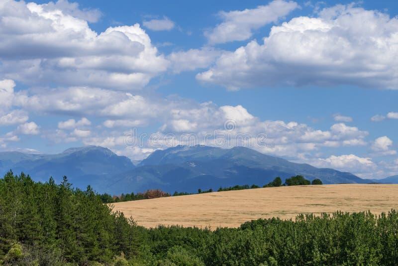 Idylliczny wiejski krajobraz na słonecznym dniu obrazy royalty free