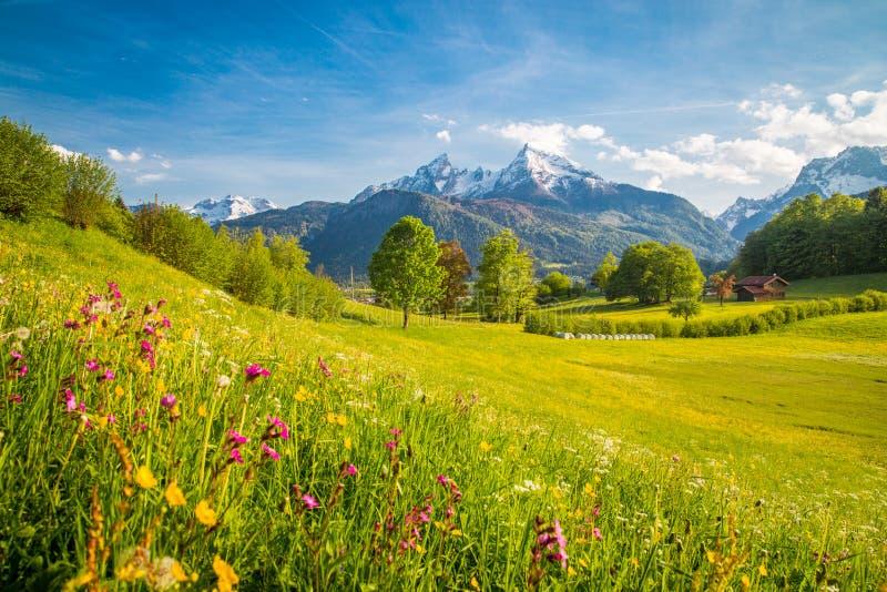 Idyllisch berglandschap in de Alpen met bloeiende weiden in de lente stock afbeelding
