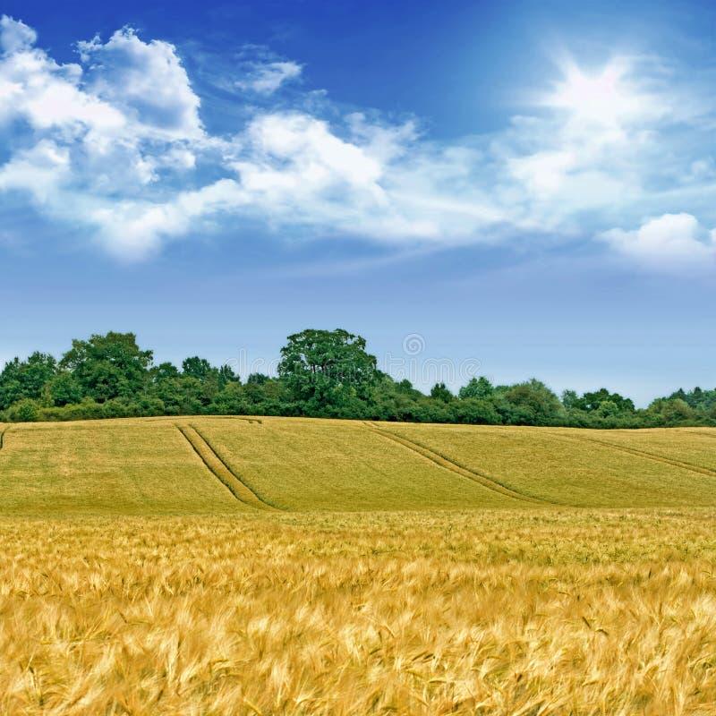 Idyllisch cornfield landschap stock fotografie