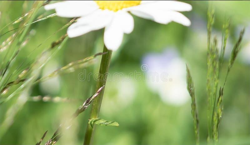 Idyllisch landelijk de zomerlandschap in het platteland met close-up DE royalty-vrije stock foto's