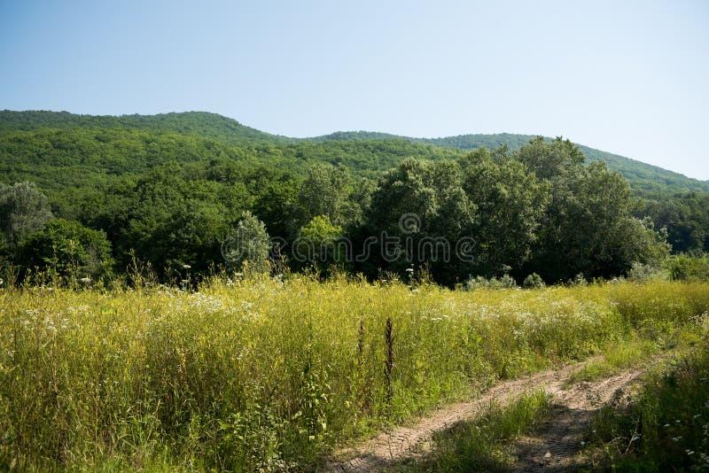 Idyllisch landschap met verse groene weiden en bloeiende bloemen en bergen op de achtergrond royalty-vrije stock afbeelding