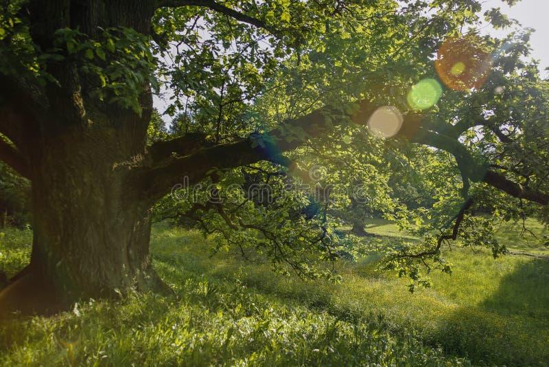 Idyllisch park op een zonnige dag stock foto's