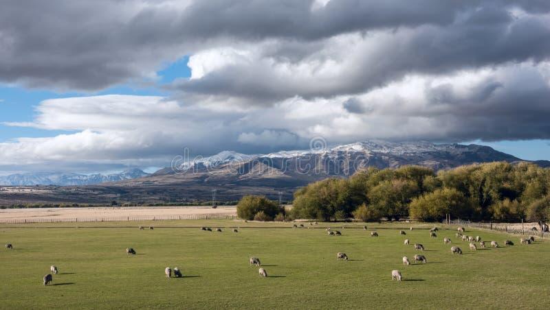 Idyllisch Patagonian landschap met lammeren royalty-vrije stock foto's