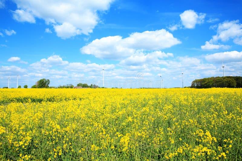 Idyllisch platteland dichtbij Ennigerloh in Muensterland, Westfalen, Duitsland royalty-vrije stock foto's