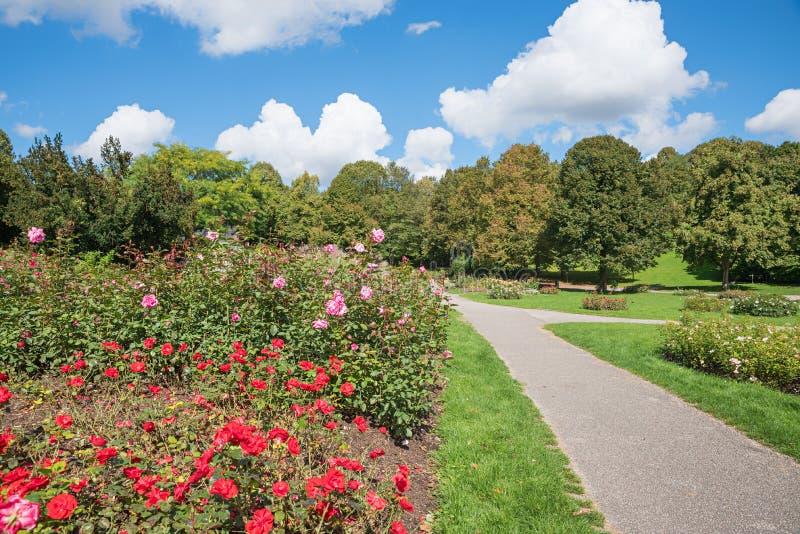 Idyllisch stadspark München in de zomer, gang naast bloeiende rozen, westpark München Duitsland royalty-vrije stock afbeelding