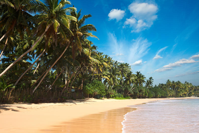 Idyllisch strand. Sri Lanka royalty-vrije stock afbeelding