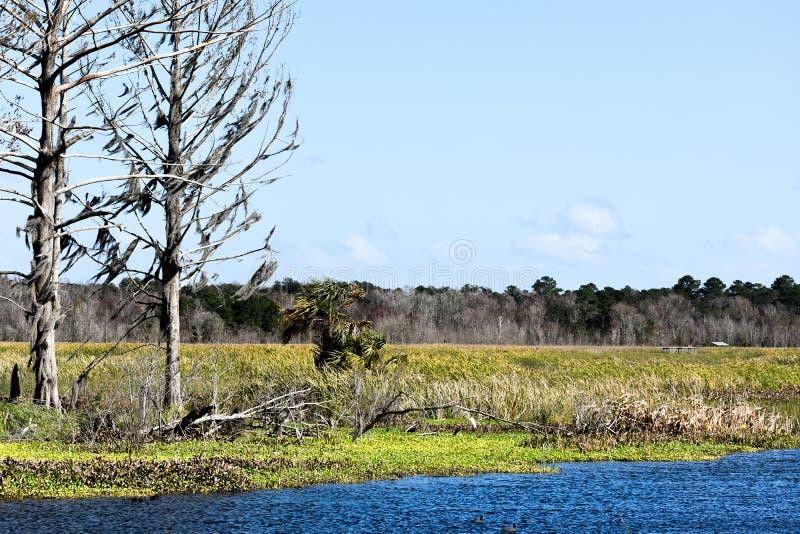 Idyllisch und Serene Story Book Setting von den alten B?umen, die einen See und ein Landschaftsschutzgebiet in Florida ?bersehen stockfotografie