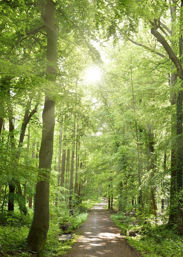 Idyllische bosweg stock afbeeldingen