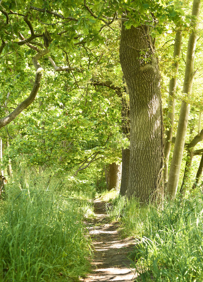 Idyllische bosweg met natuurlijke stappen royalty-vrije stock afbeeldingen