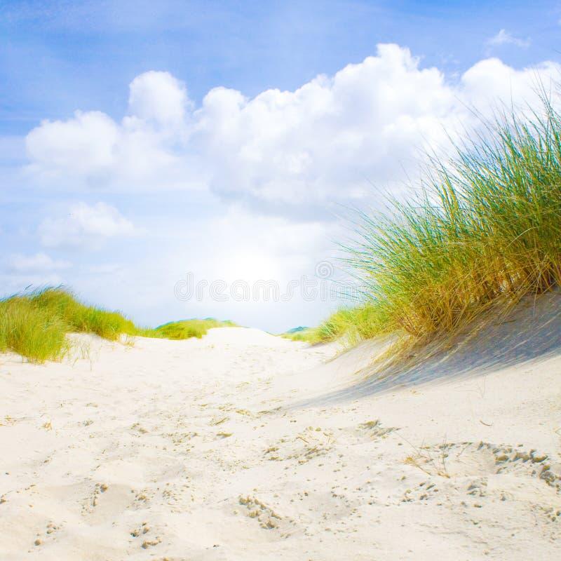 Idyllische duinen met zonlicht stock afbeeldingen
