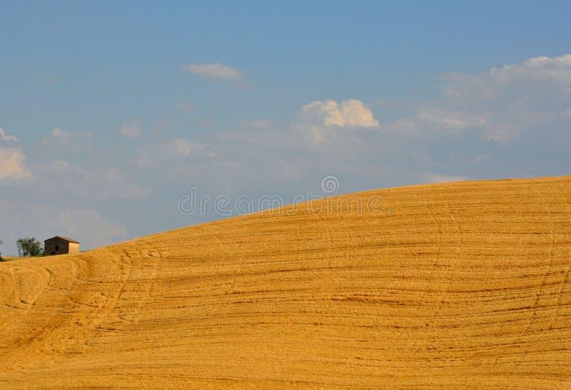 Idyllische Hügel in Toskana, Italien stockfotos