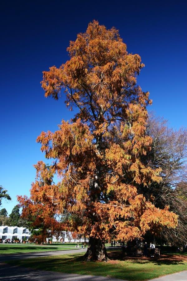 Idyllische Herbstanlage in botanischen Gärten Christchurchs, Canterbury, Südinsel, Neuseeland lizenzfreies stockfoto