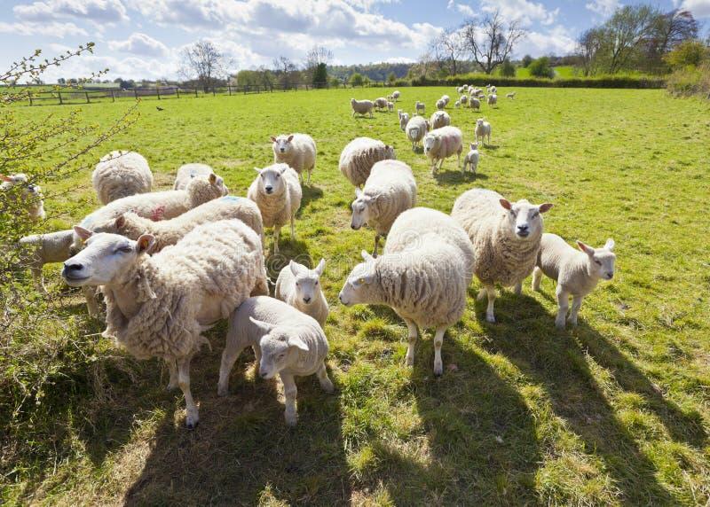 Idyllische landelijke landbouwgrond, Cotswolds het UK royalty-vrije stock foto's