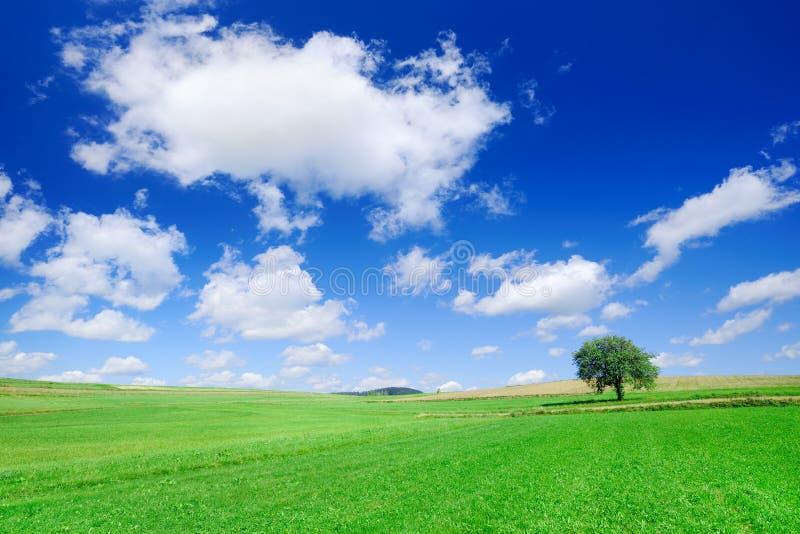 Idyllische Landschaft, einsamer Baum unter grünen Feldern stockfotografie