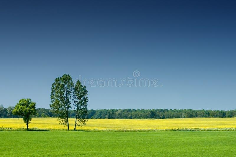 Idyllische Landschaft, einsamer Baum unter grünen Feldern stockfotos