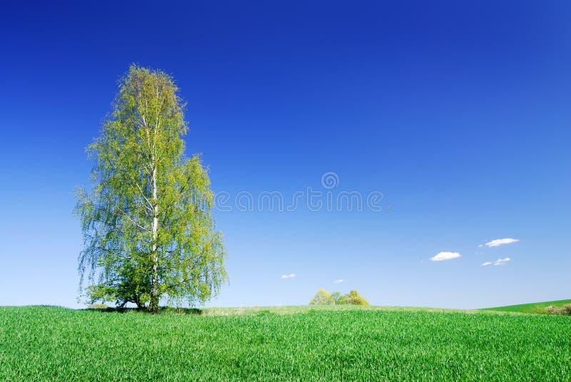 Idyllische Landschaft, einsamer Baum unter grünen Feldern lizenzfreie stockbilder