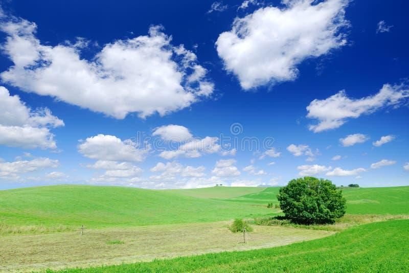 Idyllische Landschaft, einsamer Baum unter gr?nen Feldern stockbild