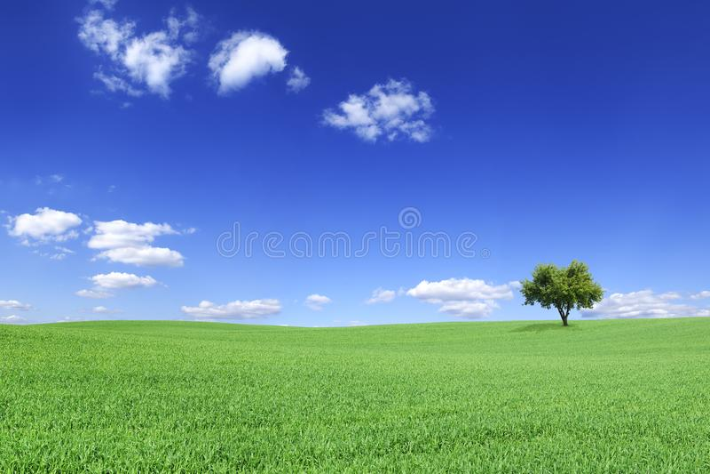 Idyllische Landschaft, einsamer Baum unter gr?nen Feldern lizenzfreies stockfoto