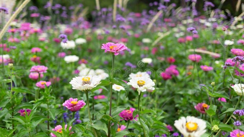 Idyllische landschapsscène van tuinbloemen in een park Het tuinieren en plattelandsconcept stock afbeeldingen