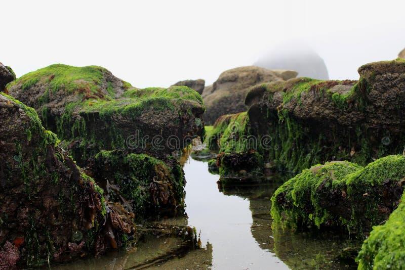 Idyllische Misty Tidal Pools, natürlicher Bereich Kap Kiwanda, pazifische Stadt, Oregon, USA lizenzfreies stockfoto