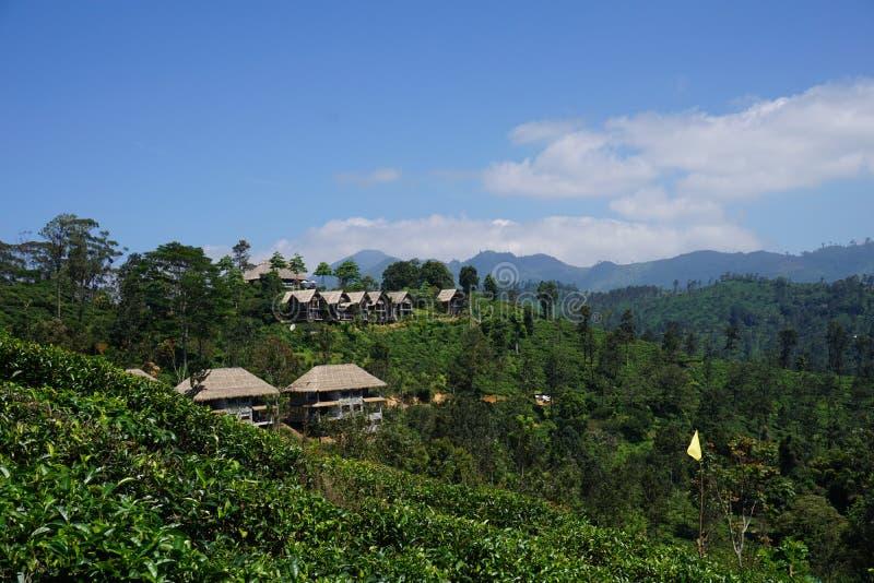 Idyllischer Erholungsort in der Tee-Plantage stockbild