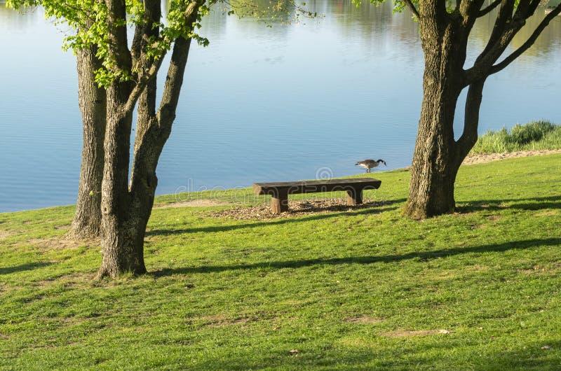 Idyllischer See mit Freizeiteinrichtungen und Erholungsgebiet im Frühjahr mit Kanada-Gans auf dem Ufer lizenzfreies stockbild