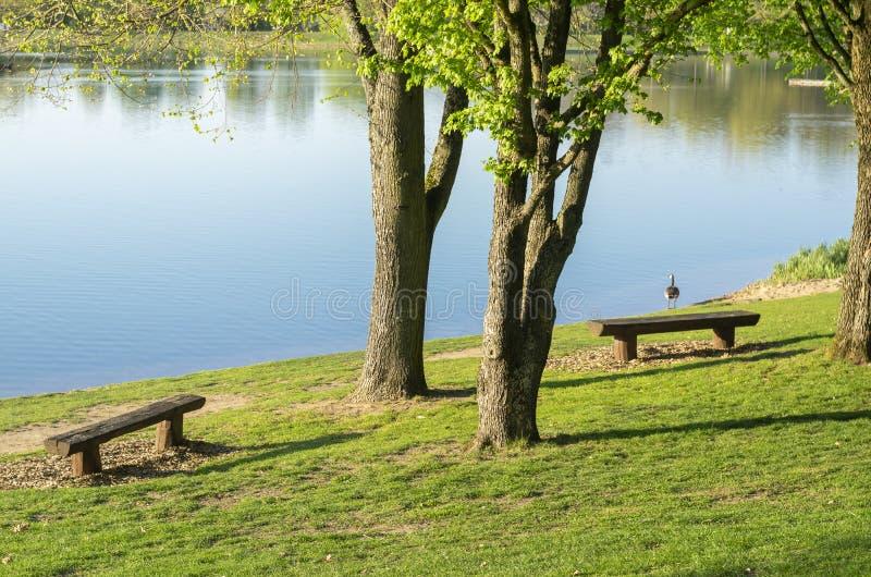 Idyllischer See mit Freizeiteinrichtungen und Erholungsgebiet im Fr?hjahr mit Kanada-Gans auf dem Ufer stockfotografie