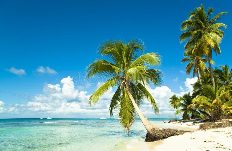 Idyllischer tropischer Strand lizenzfreies stockbild