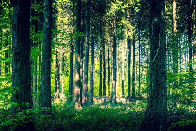 Idyllischer Wald mit einer Reinigung lizenzfreie stockfotos