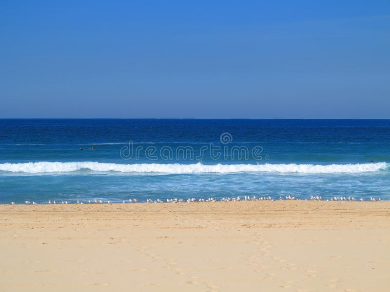 Idyllisk australiensisk strand med seagulls arkivfoton