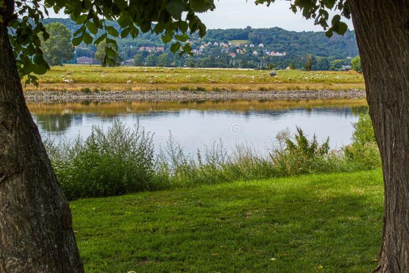 Idyllisk flodstrand i Sachsen arkivbild
