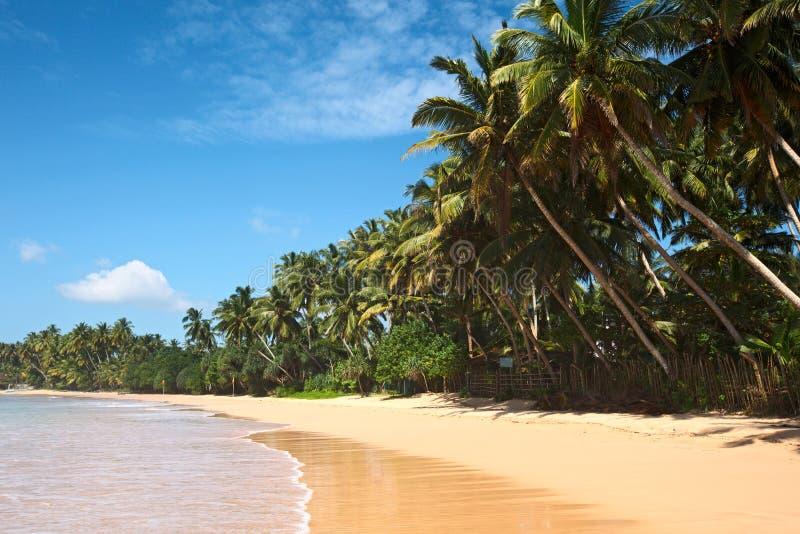 idyllisk lankasri för strand royaltyfria bilder