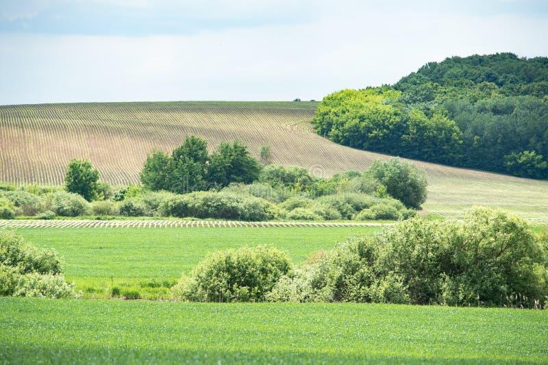 Idyllisk lantlig sikt av nätt jordbruksmark, det lantliga landskapet för vår en panorama med ett fält och den blåa himlen royaltyfria bilder