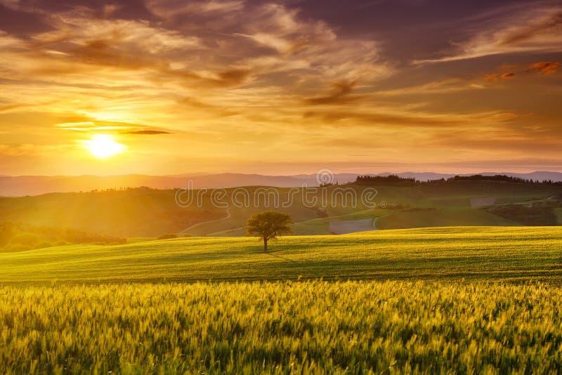 Idyllisk sikt, dimmiga Tuscan kullar i ljus av resningsolen royaltyfri fotografi