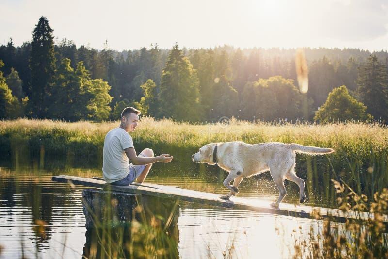 Idyllisk sommartid med hunden arkivbild