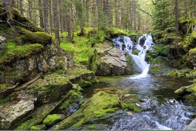 Idyllisk vattenfall i de carpathian bergen med rent vatten arkivfoto