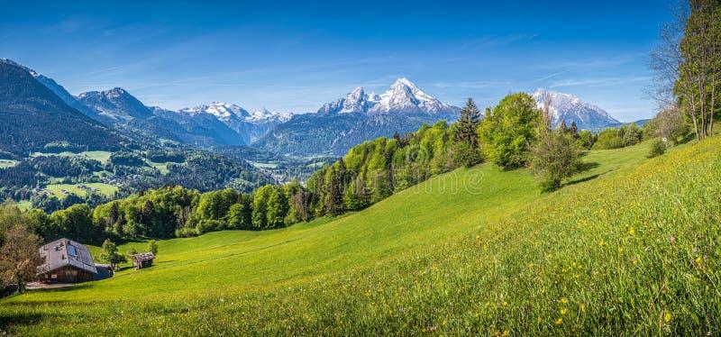 Idylliskt alpint landskap med gröna ängar, lantbrukarhem och snö-korkad bergblast royaltyfri foto