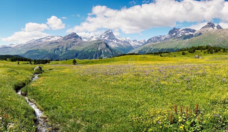 Idylliskt berglandskap i sommartiden med en liten bergström arkivfoto