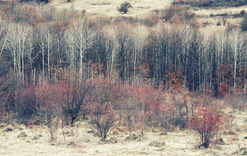 Idylliskt landskap för vinter i de Carpathians bergen arkivfoto