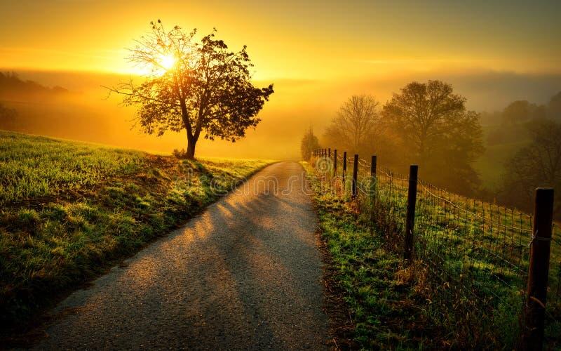 Idylliskt lantligt landskap i guld- ljus arkivfoto