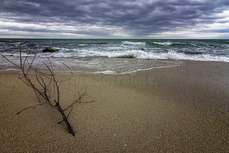Idylliskt säsongsklimat med en gren på kusten fotografering för bildbyråer
