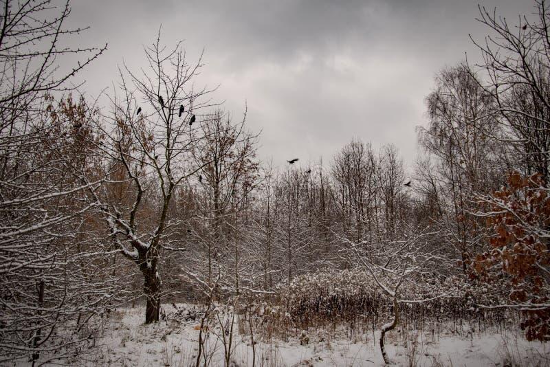 Idylliskt vinterlandskap för vinter med träd och med ny snö arkivbilder
