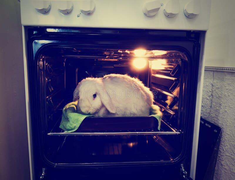 idzie weganin Promocja wegetarianizm, no zabijać zwierzęta dla mięsa fotografia royalty free