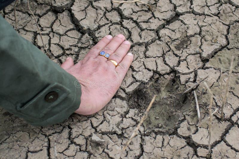 Iena Pugmark dell'animale selvatico su terra bagnata immagine stock libera da diritti